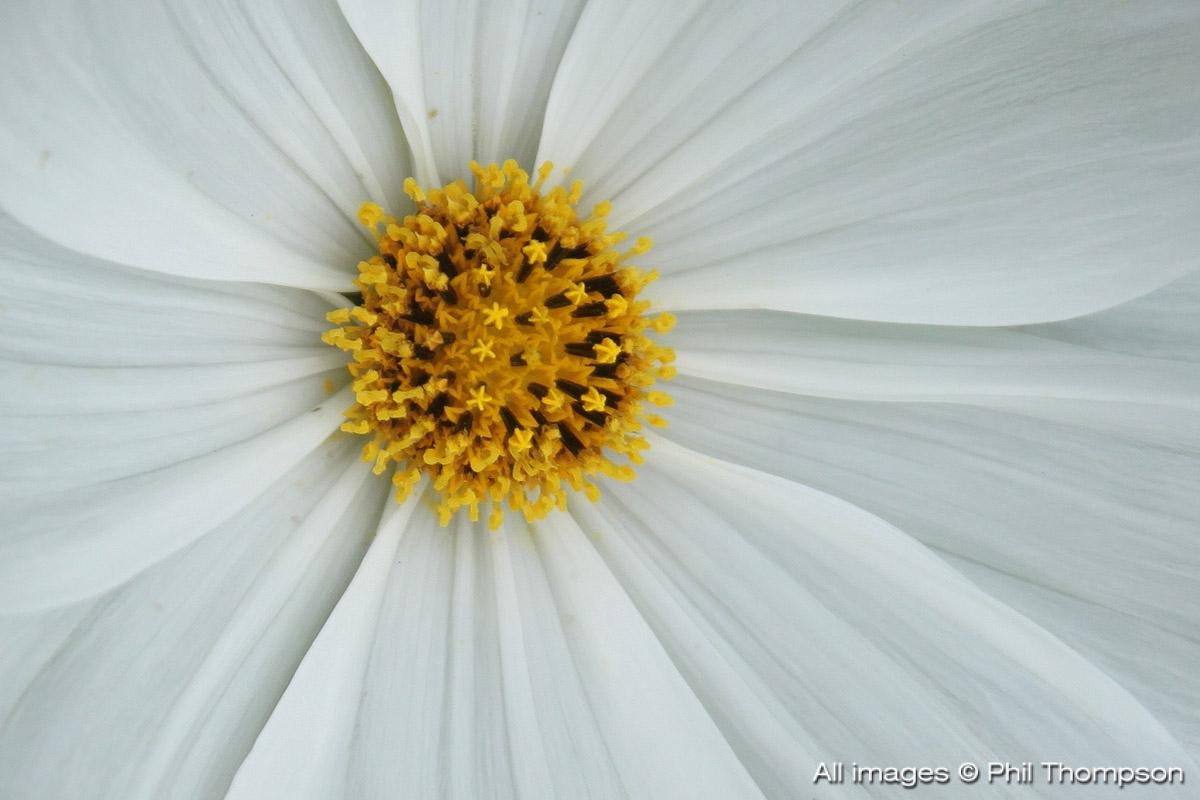 IMG 2560 2 - daisy daisy